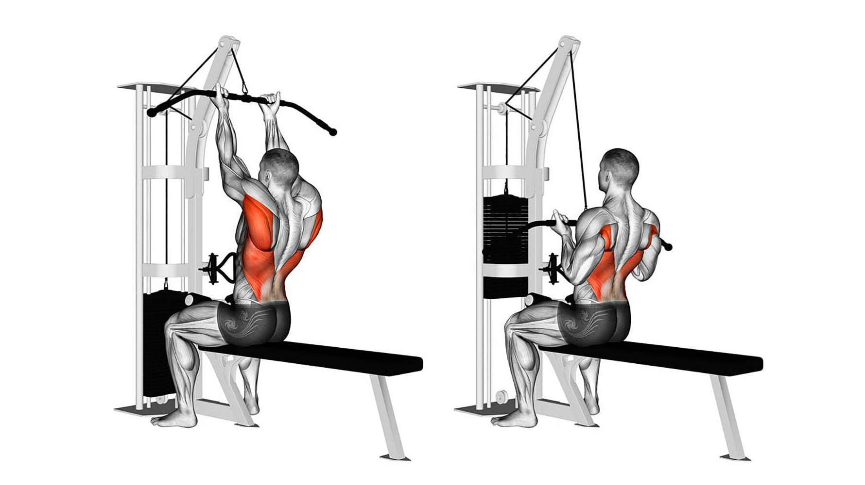 reverse grip lat pulldown muscles worked